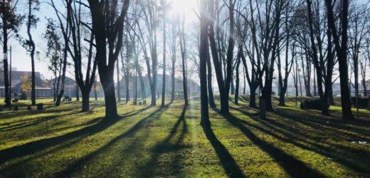 """VIZIJA: Pirot da bude""""zeleni grad"""""""