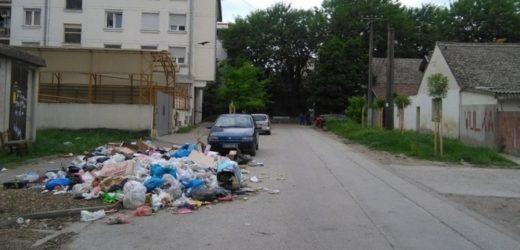 Oštrije kazne u Novom Sadu, 25.000 dinara za nesavesno držanje pasa i bacanje smeća po ulici