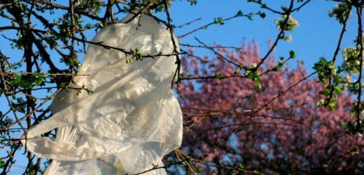 Plastične kese – Ekološke stranputice i putokazi