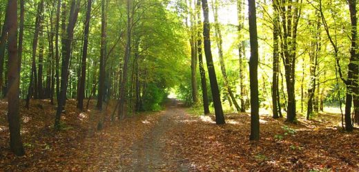Podignimo šume u Vojvodini
