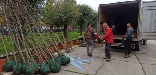 Održana akcija ozelenjavanja škola u Zrenjaninu
